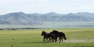Mongolia – country of ostensible uniformity
