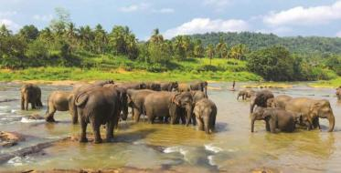 Sri Lanka: Holy island - a symbol of easy living