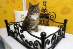 Foto: Longcroft Luxury Cat Hotel